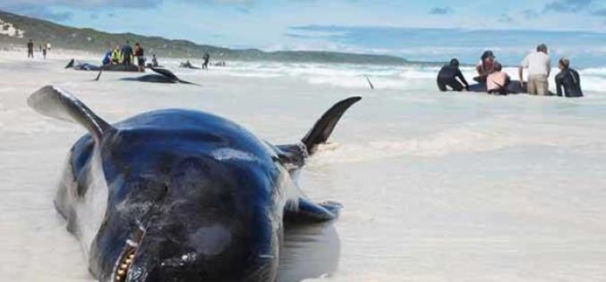 El último viaje de la ballena