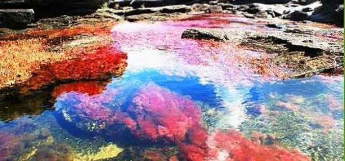Caño Cristales, el río que atrapó un arcoíris en Colombia