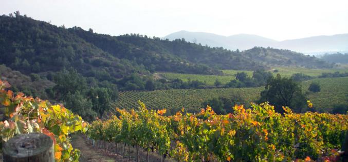 Entre la tierra y el vino, la uva