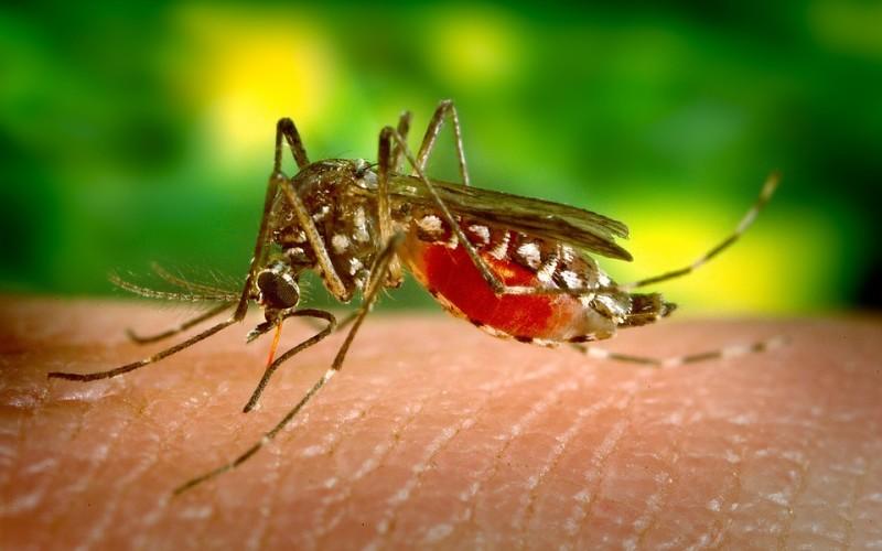 OMS: el virus zika se propaga de manera explosiva en el continente americano