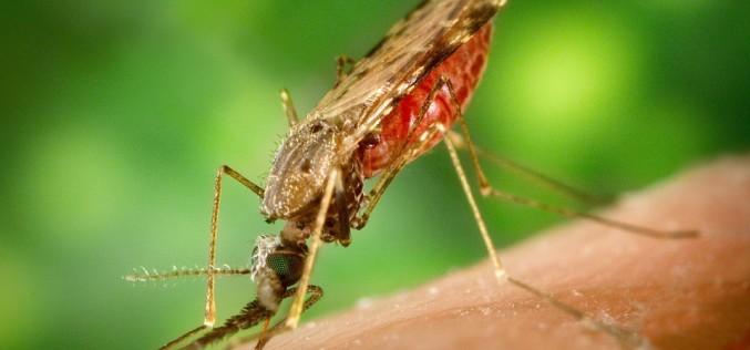 Grupo Avance descubre repelente orgánico contra el mosquito trasmisor del zika