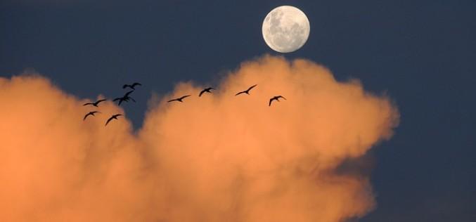 Luna Nueva ¿Qué debemos hacer?
