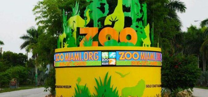 """Zoológico de Miami inaugurará """"Florida: Misión Everglades"""""""