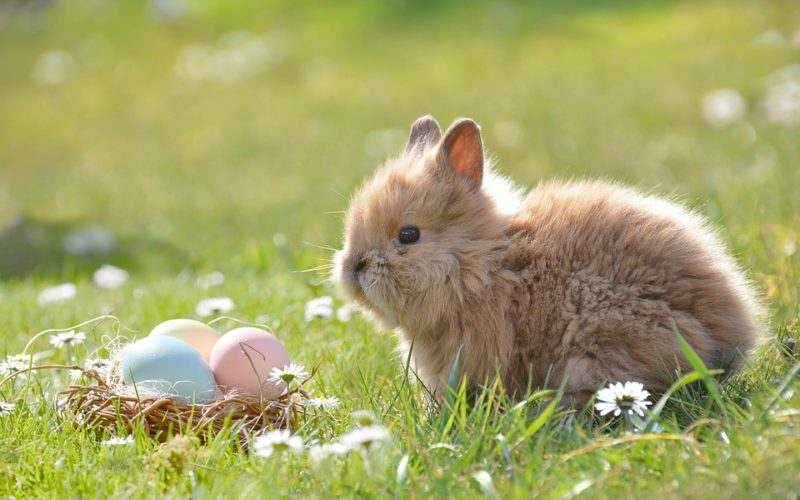 Huevos de Pascua: curiosidades