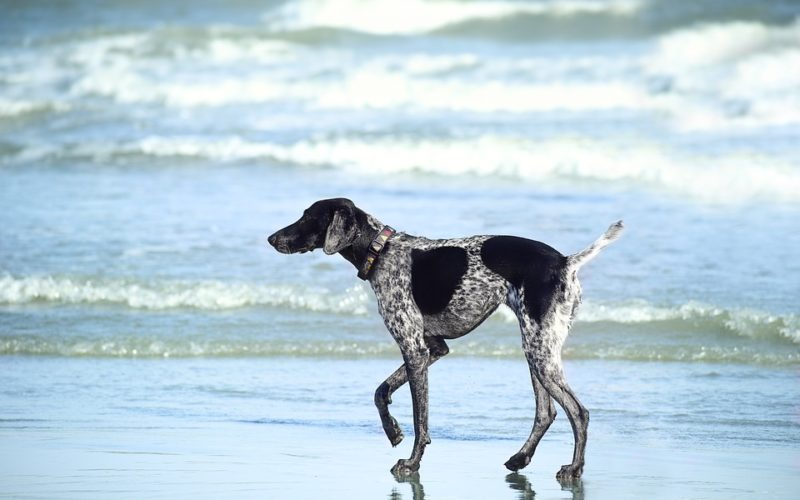 Huntington Dog Beach: el paraíso playero de los perros