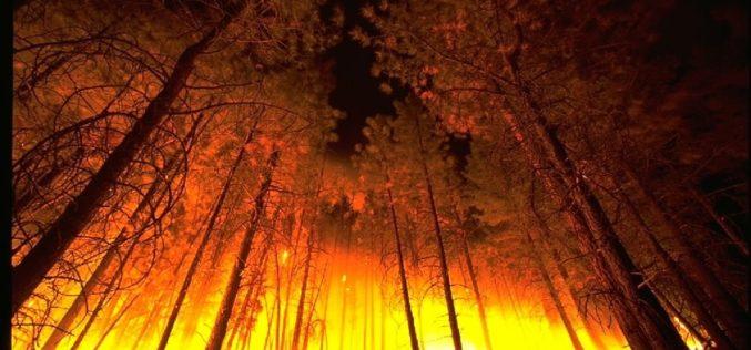 «Thomas» se convierte en el mayor incendio de la historia de California