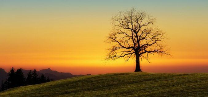 Los niños y el árbol de Saussure, un poema de Eduardo Escalante