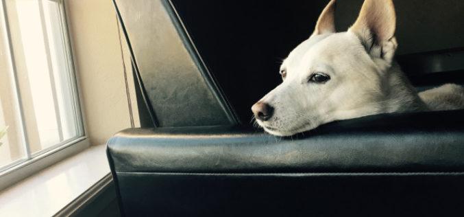 Perro amor: el hasta luego a Rusty