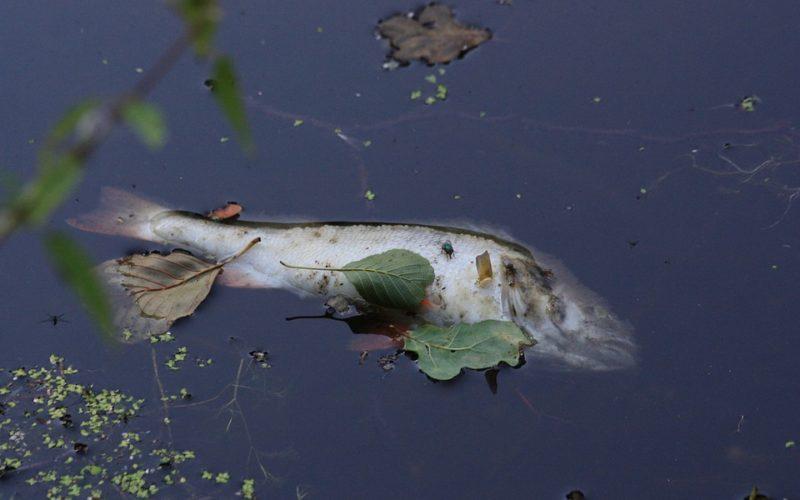 Marea roja mata a miles de criaturas marinas en Florida