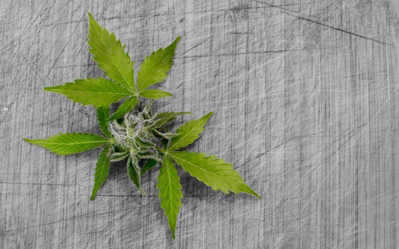 Marihuana: ¿qué pasa cuando la dosis personal afecta los derechos del resto de la sociedad?