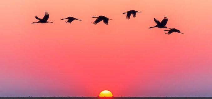 Partimos al alba, un poema de Eduardo Escalante