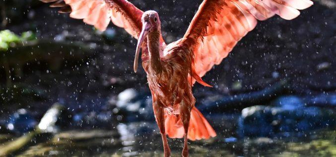 Cuando el pájaro chocó con el vidrio de la ventana, un poema de Eduardo Escalante