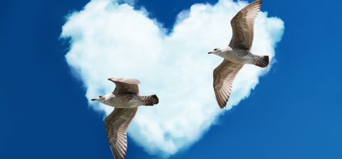 Cada mañana las gaviotas danzan, un poema de Eduardo Escalante