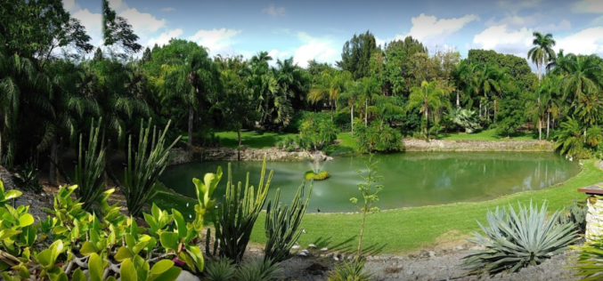 Parrot Jungle – Pinecrest Gardens: un oasis en Miami