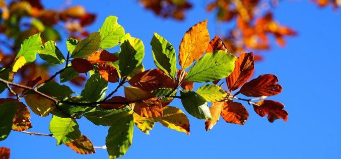 Despiertan las hojas dormidas, un poema de Eduardo Escalante