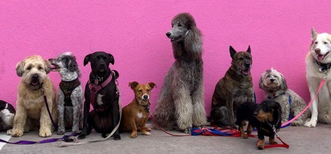 Florida ocupa el puesto número 2 en reclamaciones de mordidas de perros