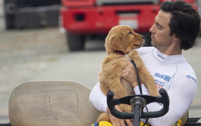 The Art of Racing in the Rain: lecciones caninas para la vida