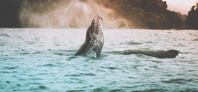 Advierte la ONU: hay un millón de especies amenazadas de extinción
