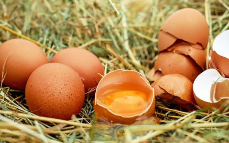 Ciencia alimentaria: La carrera multimillonaria para reemplazar a los huevos