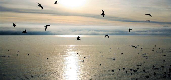 Un amanecer distinto, un poema de Eduardo Escalante