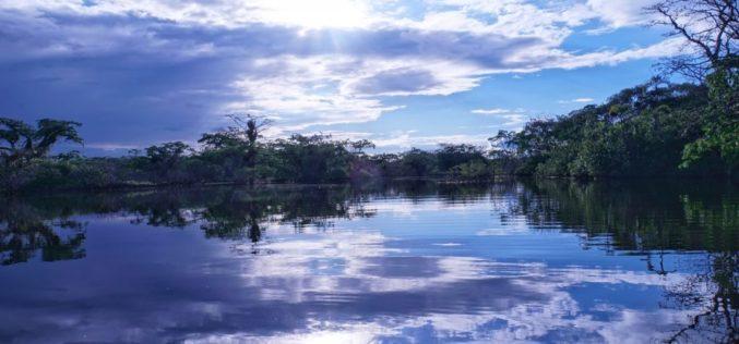 Diluyéndome mirando la Amazonía, un poema de Eduardo Escalante