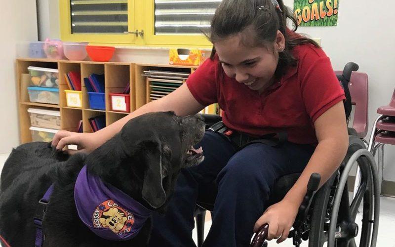 Día Mundial de la Salud Mental: Perros de terapia traerán alegría a los pasajeros de Brightline